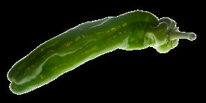 Pimiento_verde_02_150
